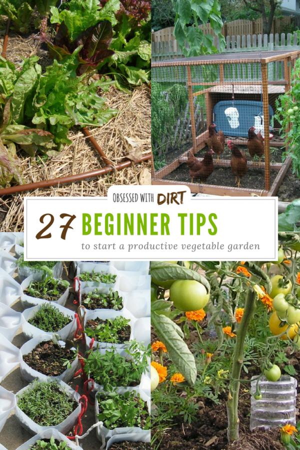 27 Tips For Beginner Vegetable Gardeners To Grow More Food 400 x 300