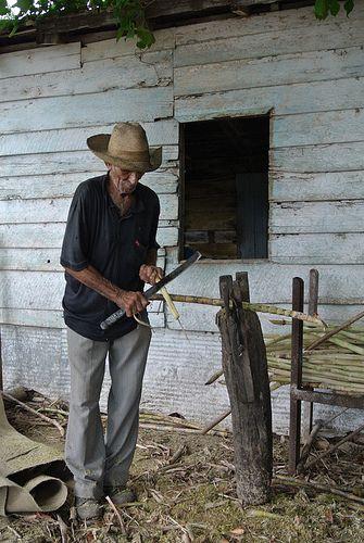 Guajiro. Valle de Los Ingenios, Cuba