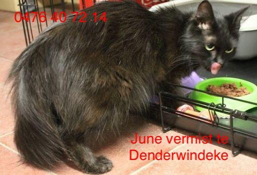 June vermist te Denderwindeke! Wie heeft haar gezien? 0476 40 72 14