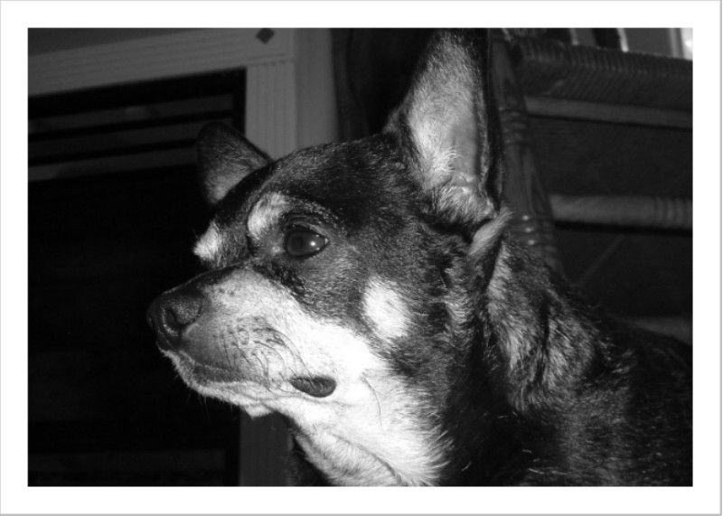 Chachi Rest In Peace We Love You And Miss You So Much Dogs Missing You So Much Rest In Peace