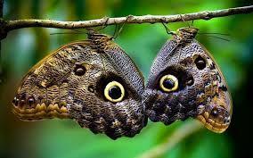 Resultado de imagen para central America Birds and Butterflies