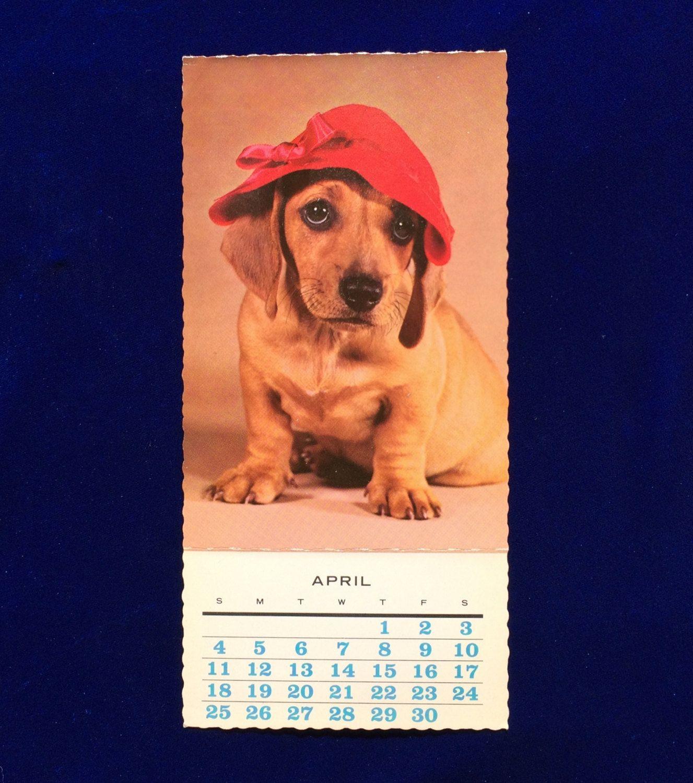 1965 Dachshund Dog Photo Postcard April Calendar Hallmark