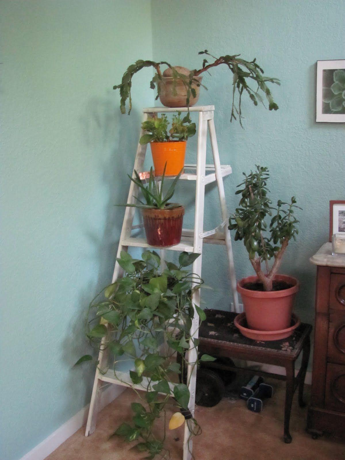 plant ladder - Google Search | Inspirations ! | Pinterest | Plants ...