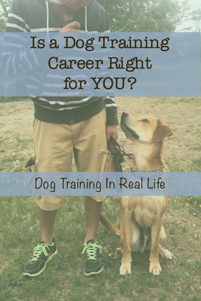 As Part Of My Series On How To Become A Dog Trainer It S Only Fair That We Chat About What A Dog Tra Dog Training Obedience Dog Training Become A Dog