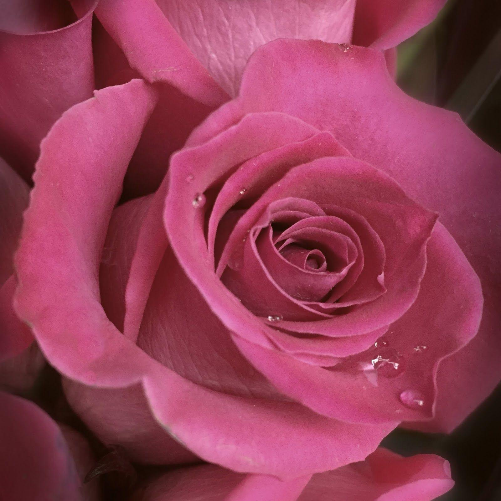 La Vie En Rose Victor Hugo And Flowers