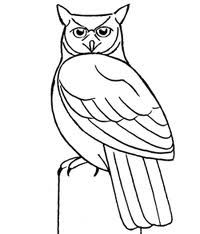 Great Horned Owl Drawing Owl Pictures Drawings