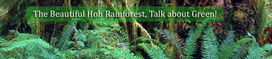 The Hoh Rainforest is near Forks, WA (Yes, THAT Forks of Twilight fame).  It's enchanted and breathtaking.