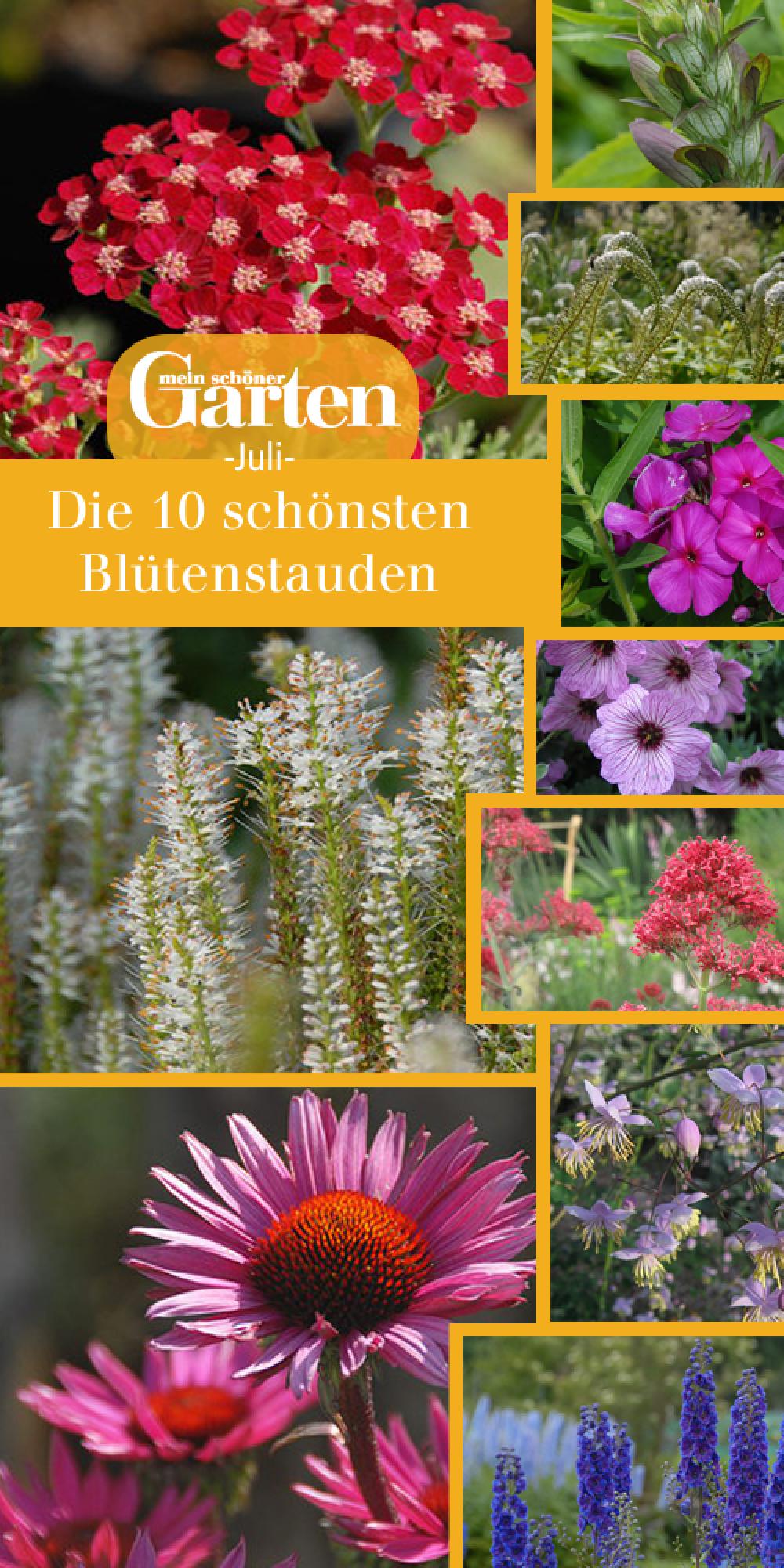 Die 10 schönsten Blütenstauden im Juli | Stauden, Schöne gärten und ...