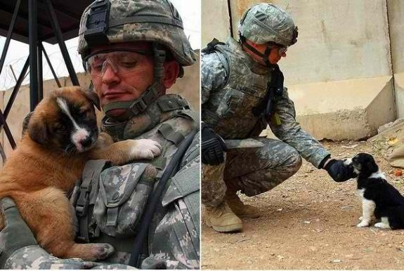 Soldiers And Their Pets 3 3 Puppies Animal Heros Military Dogs
