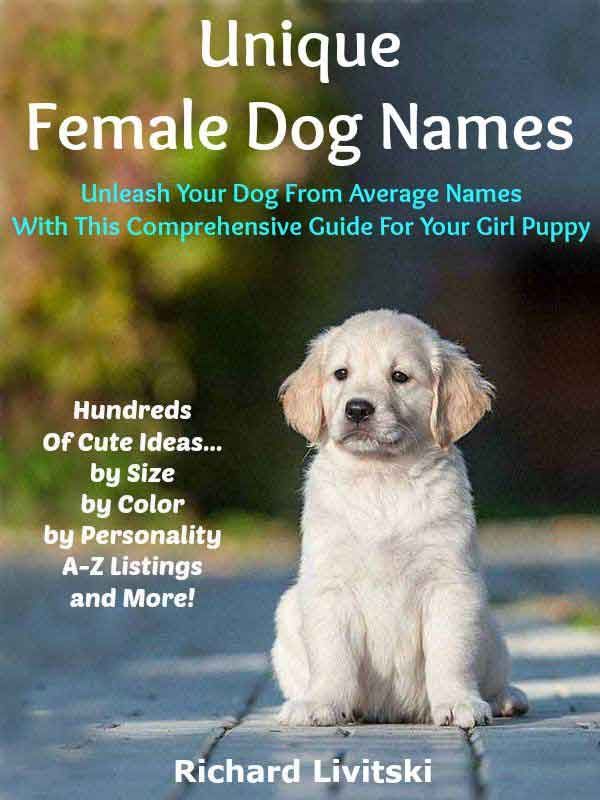 The Best Golden Retriever Names 110 Names For Your Golden
