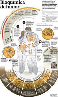 San Valentín al desnudo: Bioquimica del  ¿Qué produce el amor en nuestros cuerpos? Algunos señalan que al enamorarnos, la química de nuestro cuerpo se altera. ¿Será cierto esto? Psicologia Del Amor, Psicologia Y Psiquiatria, Infografia Psicologia, Psicologia Educativa, Ayuda Psicologica, Terapia Cognitiva, Salud Mental, Masoterapia, Salud Corporal
