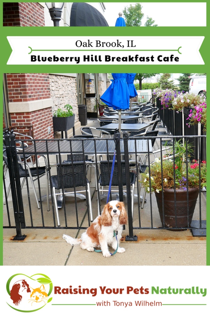 Dog Friendly Restaurants In The Chicago Area Dog Friends Road Trip With Dog Cute Cats Dogs