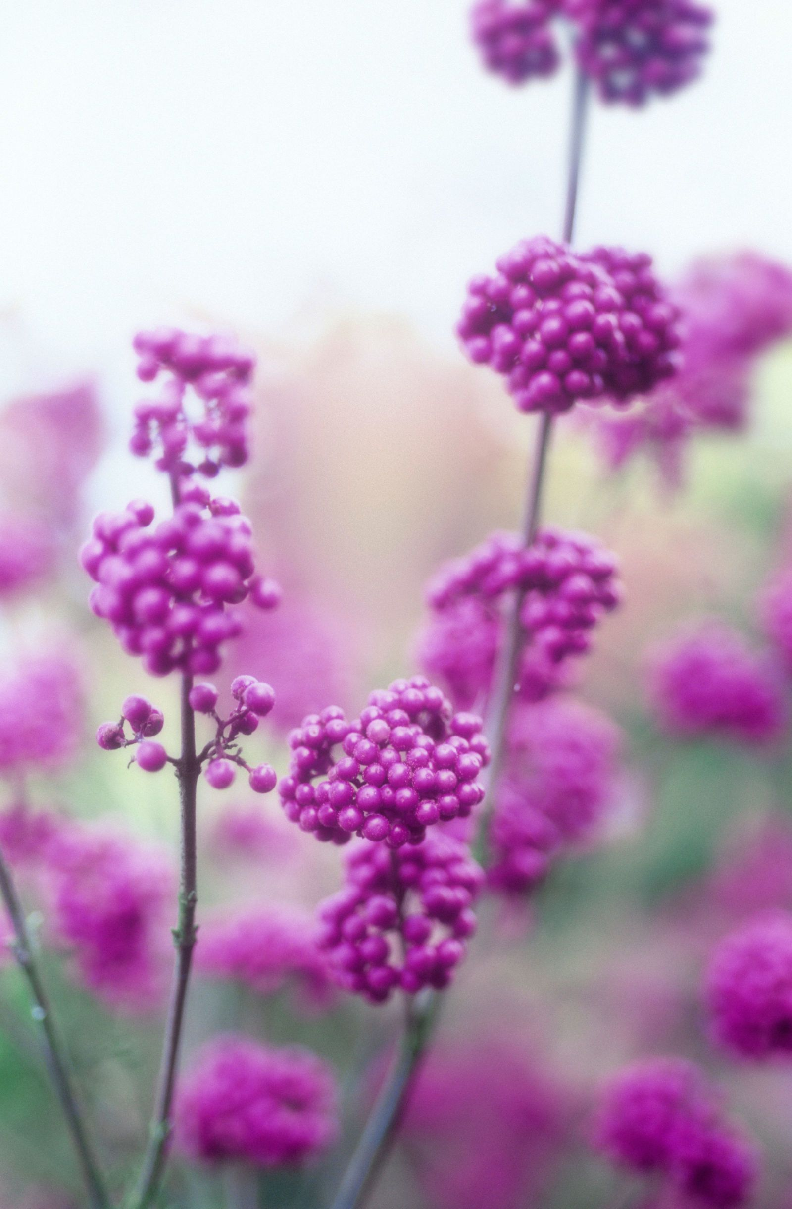 20 beautiful fall flowers and plants for your garden mightylinksfo