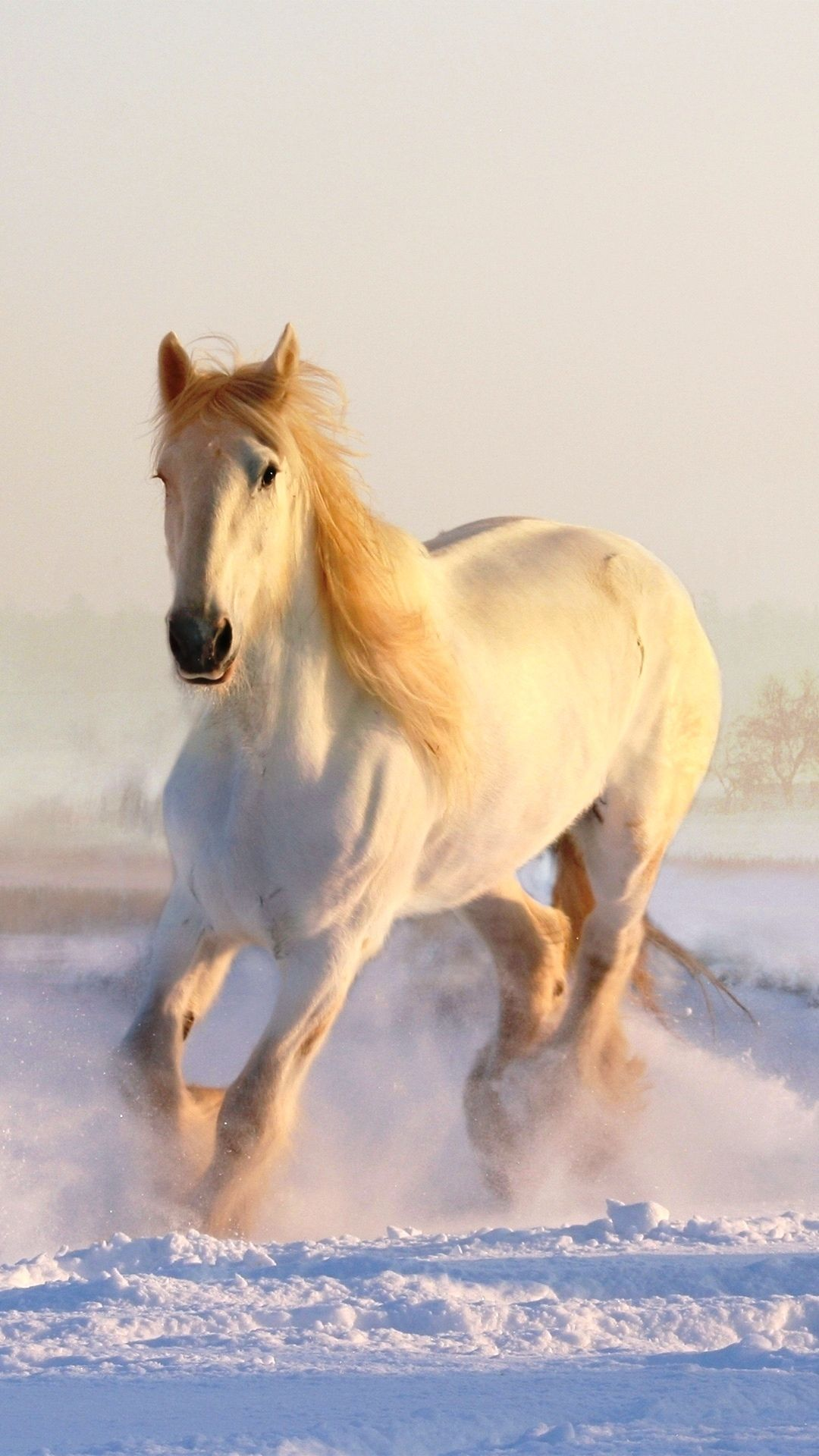 Pin By Gen Di Di B On Horse Pics Horses In Snow Horses Horse Wallpaper