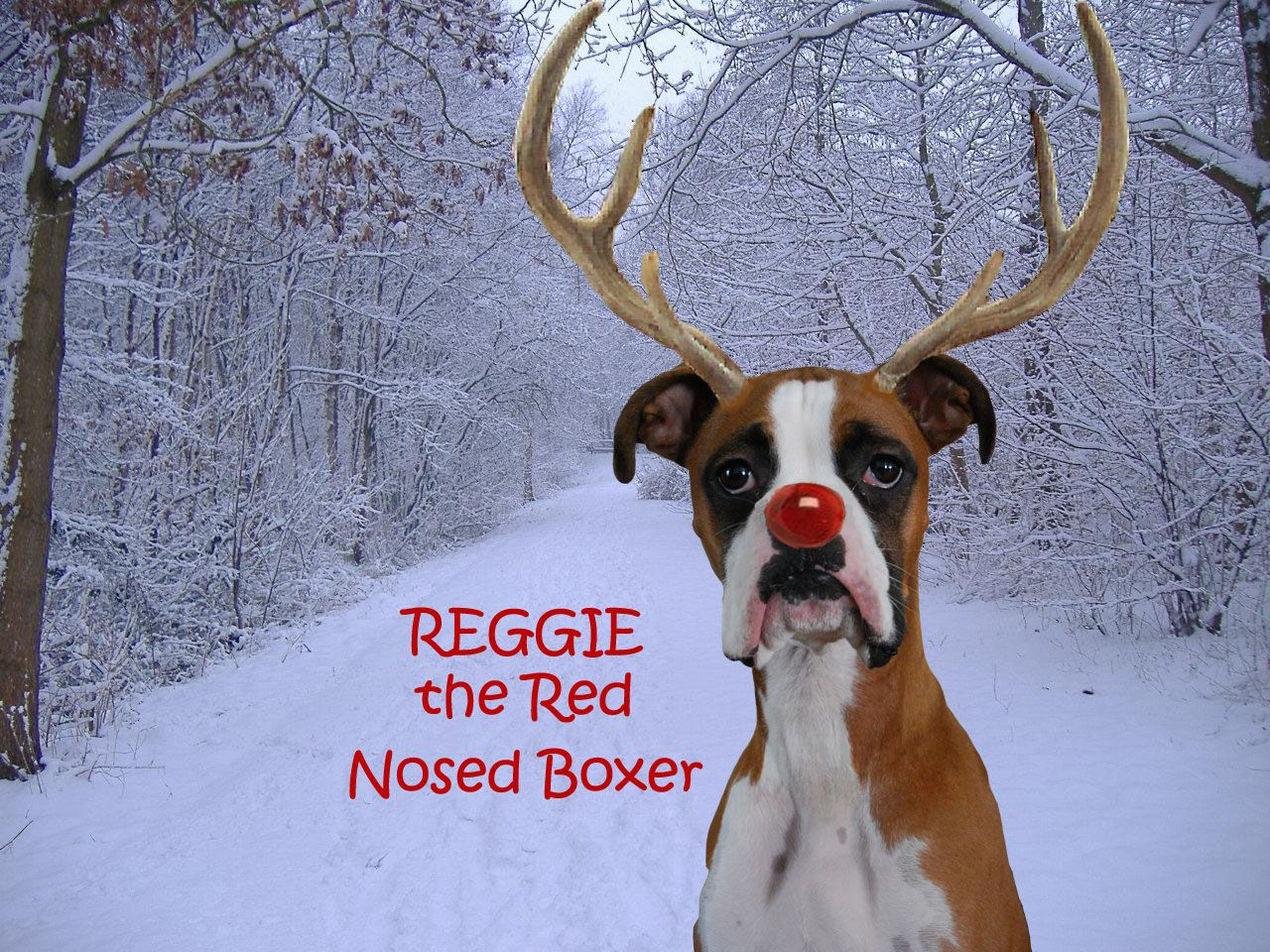 Are Boxers Good Inside Dogs
