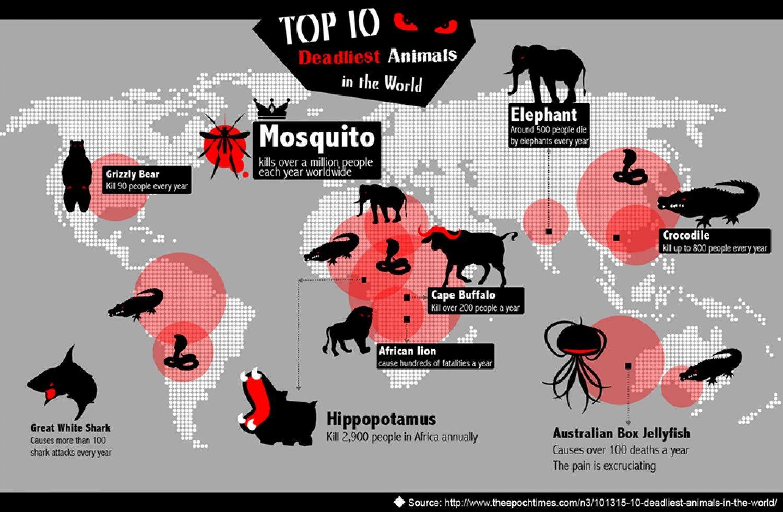 Idea by 雅宣 張 on Design// map Top 10 deadliest animals