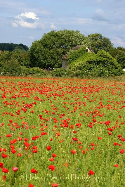 Biddeston, one of the many delights Wiltshire has to offer. Come and stay at another www.avalonlodge.co.uk