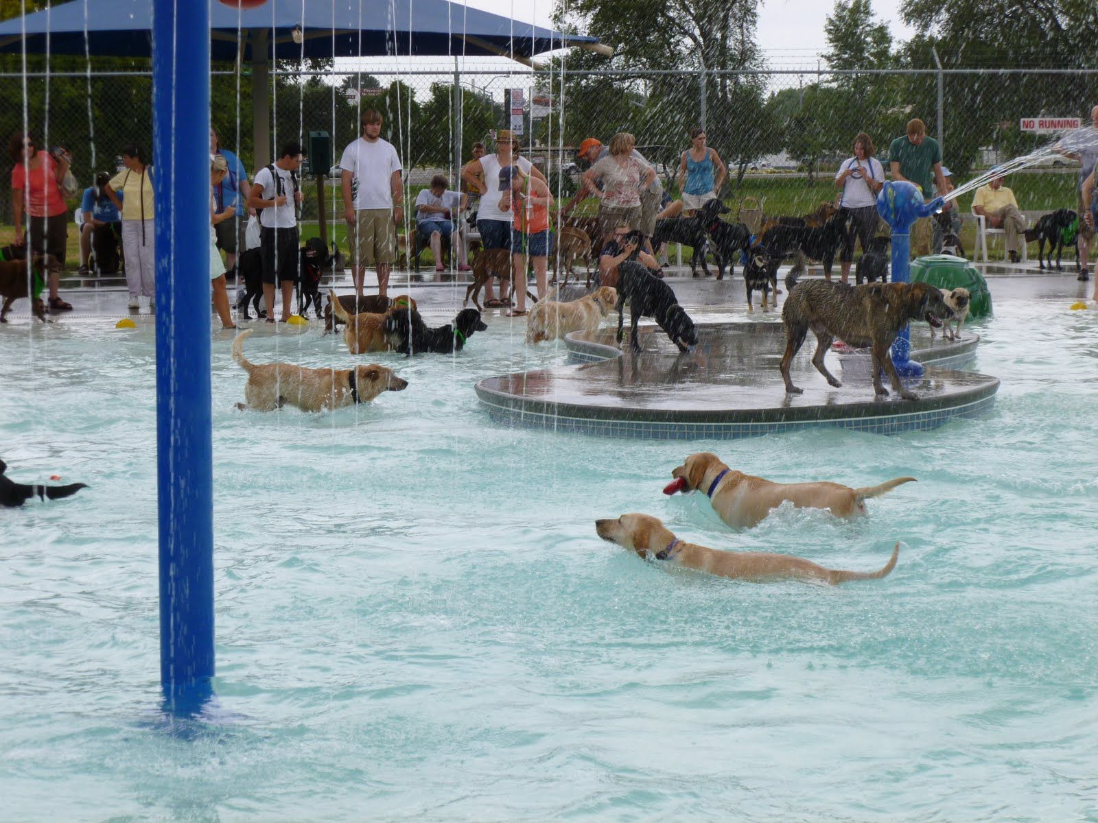 Twin Falls Temple And Dog Swim Party 041 Jpg 1 600 1 200 Pixels Dog Pool Dog Swimming Dog Park Design