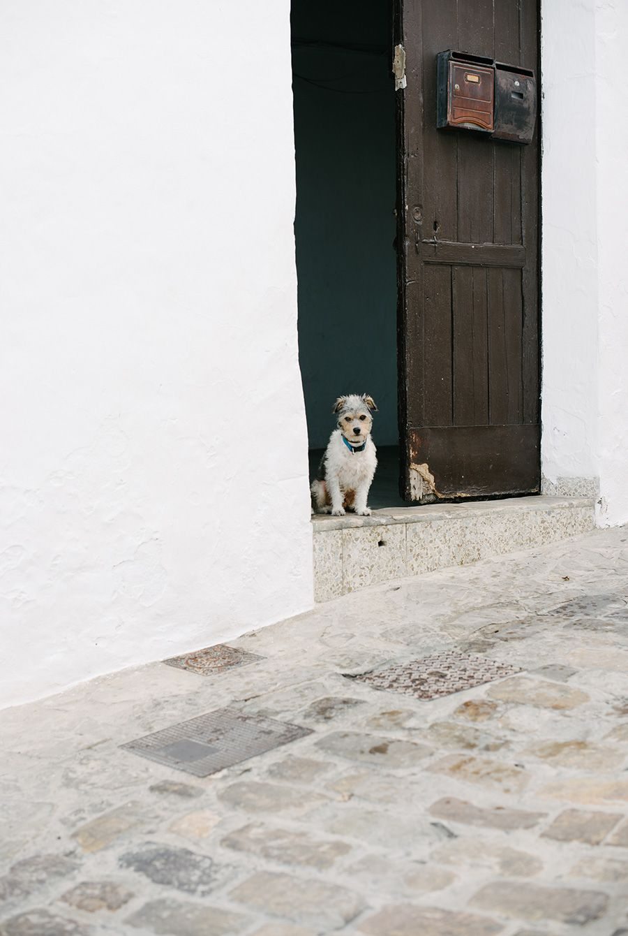 waiting for you in andalusia #dogs