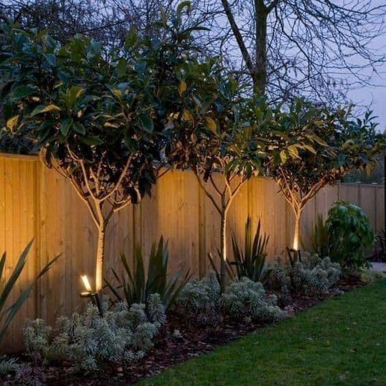 trees around the fence with an appealing back light #trees #fence #gardenfence #gardenfenceideas #privacyfenceideas #privacyfence #privacylandscape#backyardLandscaping #backyardLandscapingIdeas #landscaping #cheapLandscapingIdeas #backyard #landscaping #curbAppeal