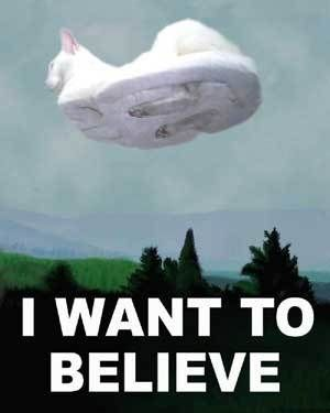 Image result for hovercat is hovering