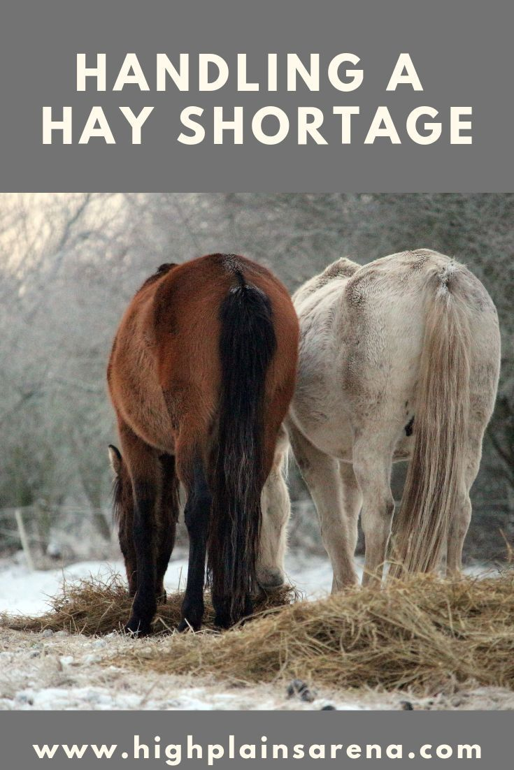 How to extend your forage for your horses when you are facing a hay shortage.