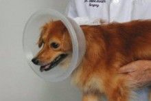 Diy Bowl Dog Cone Collar Now How To Get It On And Off Dog