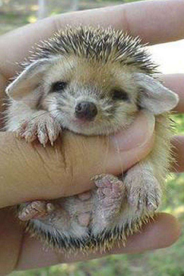 Top 15 Cutest Baby Animals (VIDEO)