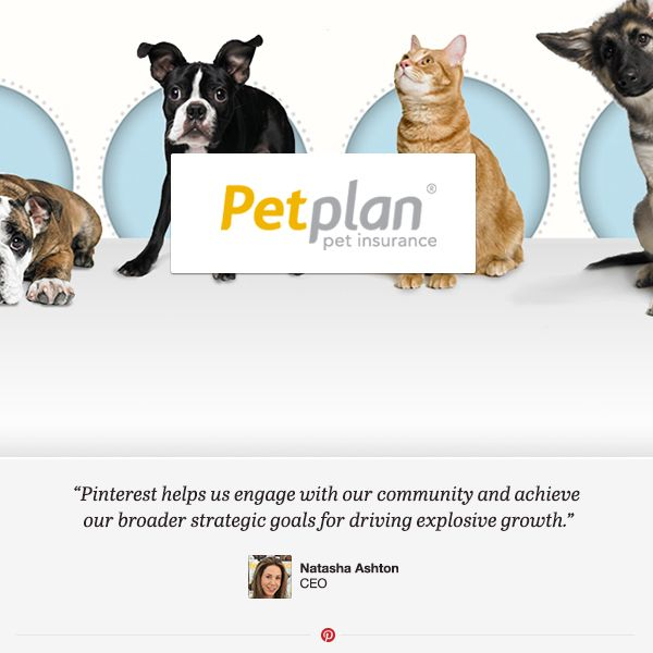 Come Learn About How The World S Largest Pet Insurer Petplan Is
