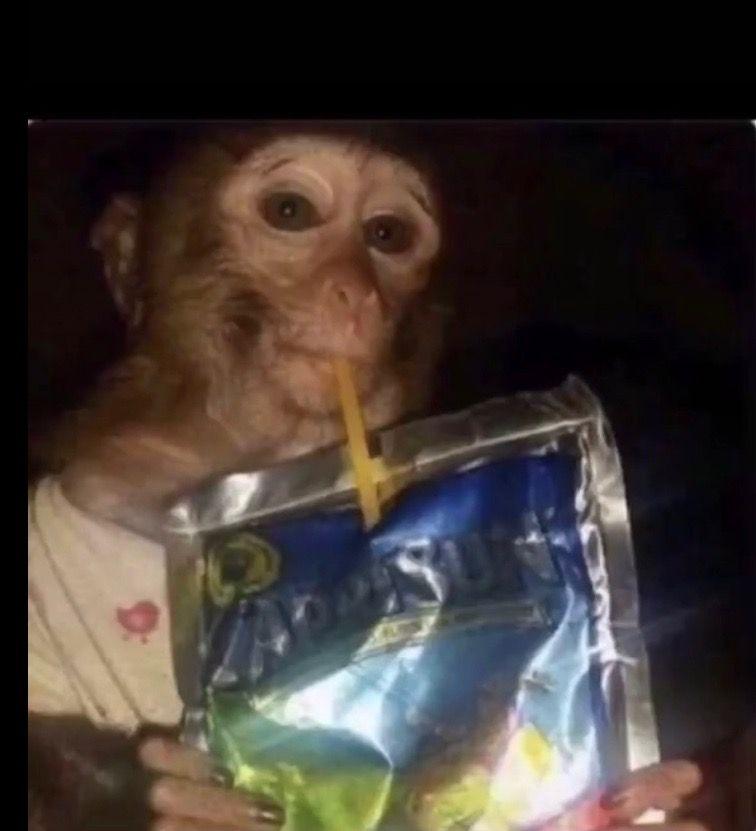 Funny Monkey Drinks A Caprisun Meet You Instagram Posts Monkeys Funny