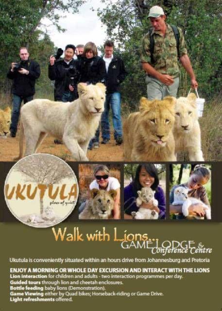 Ukutula Lion Park Lodge Park Lodge Gap Year Africa