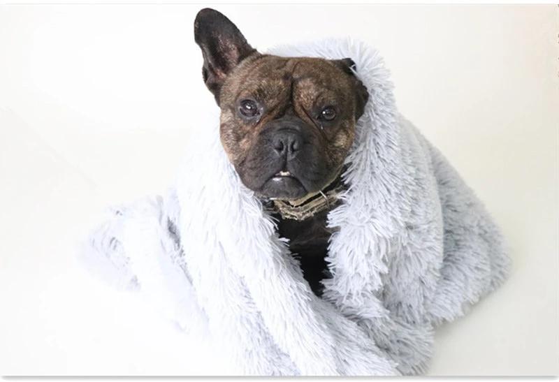 Best Blanket Ever in 2020 Blanket dog bed, Cool dog beds