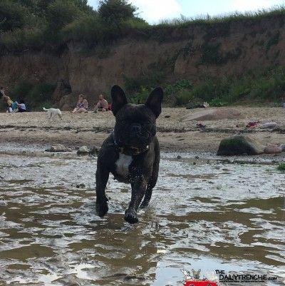 Sportlich am Hundestrand unterwegs