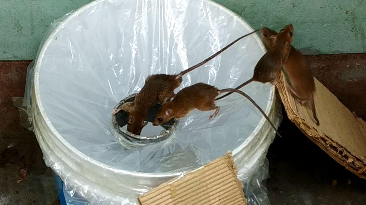 Best idea trap easy saving ratrat trap 1 gatestupid