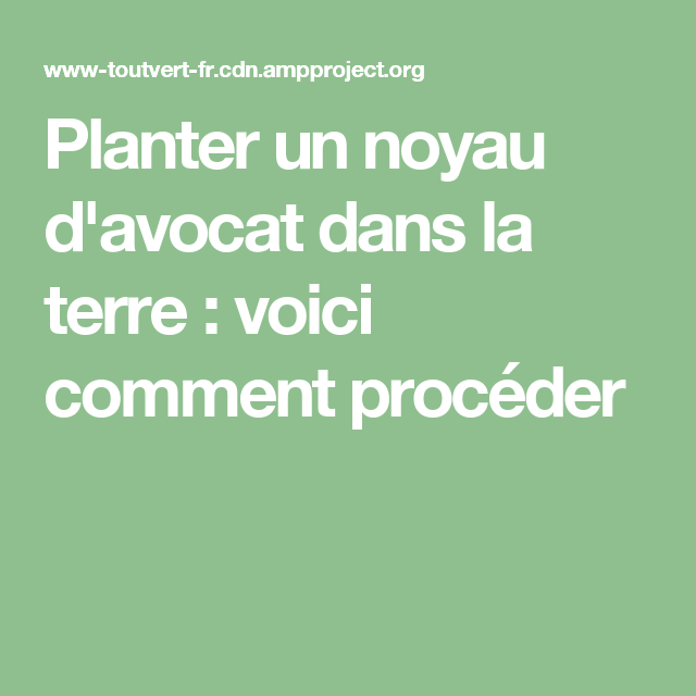 planter un noyau d 39 avocat dans la terre voici comment proc der avocat pinterest planters. Black Bedroom Furniture Sets. Home Design Ideas