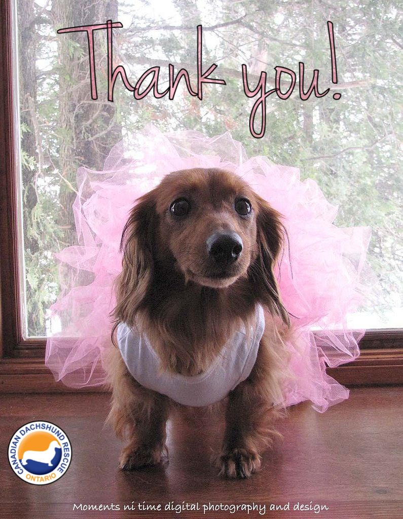 A Big Thank You To Bedrock Kennels They Have Helped To Raise Over