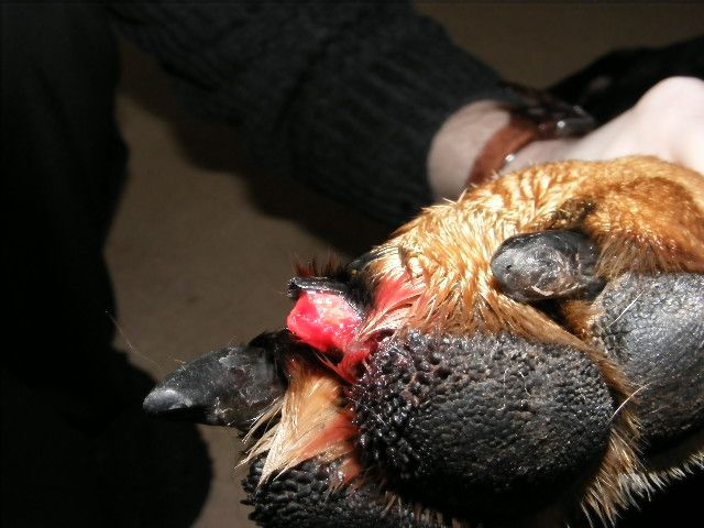 What Can I Use To Stop Bleeding On My Dog