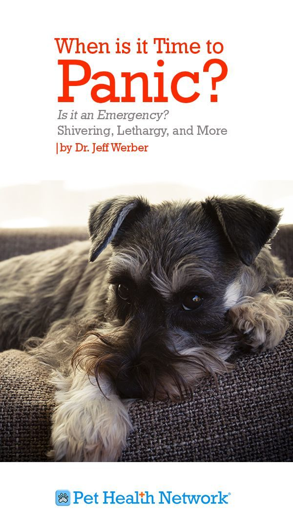 Is Shivering And Shaking In Pets A Sign Of A Medical Emergency