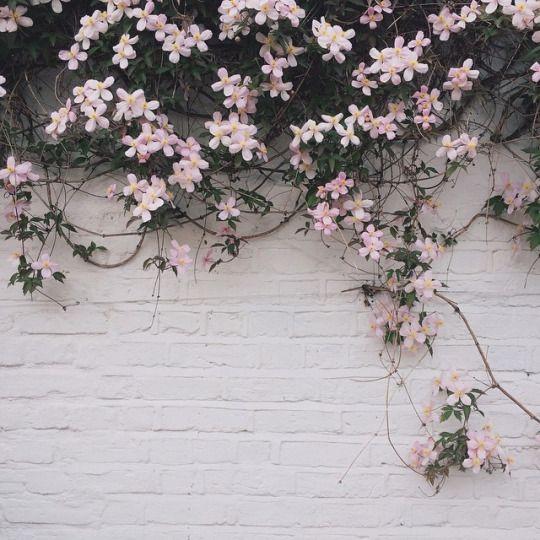 Bellesandghosts Gray Aesthetic Wallpaper Plants
