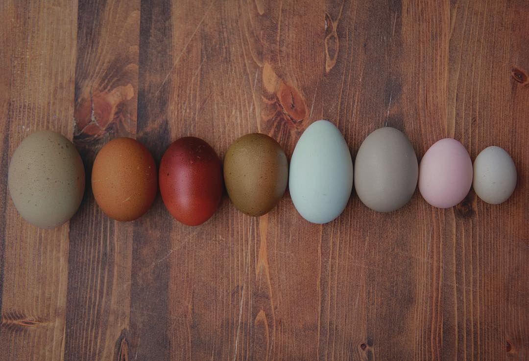 Weird Egg Photos 7