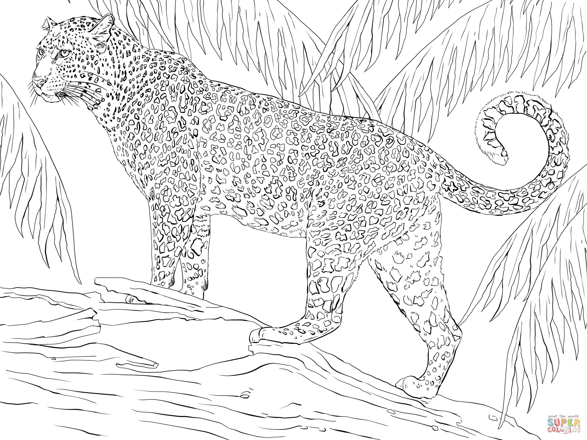 Jaguar Super Coloring With Images Zoo Animal Coloring Pages