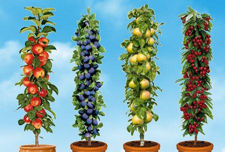 Winterharde fruitbomen 4 of 8 stuks | Appel, peer, kers en pruim