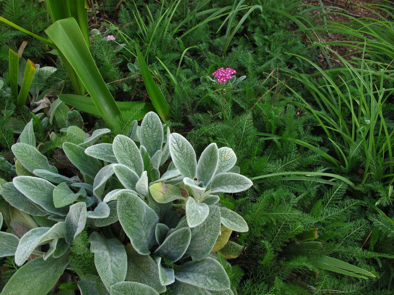 Орхидея комнатная цветение фото любопытна