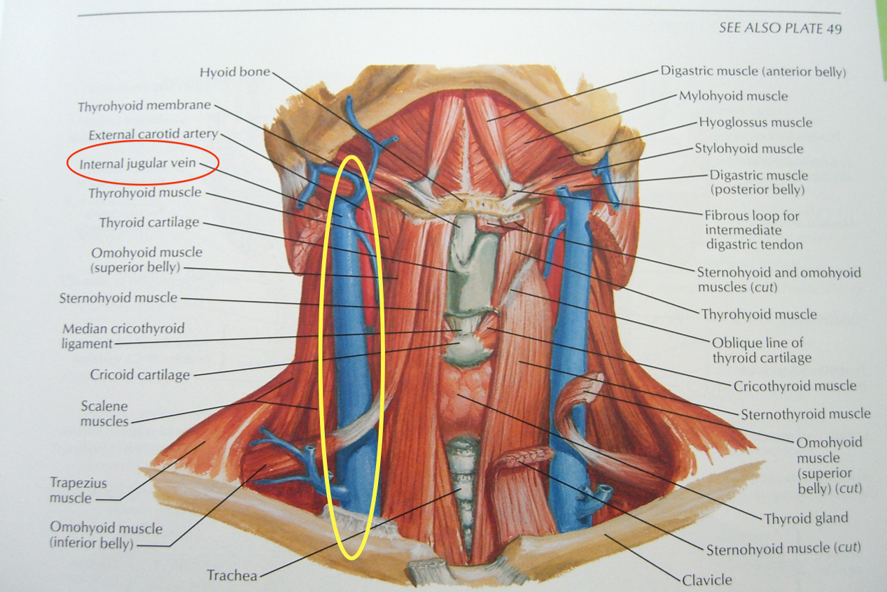 Anatomy If Neck And Back Diagram