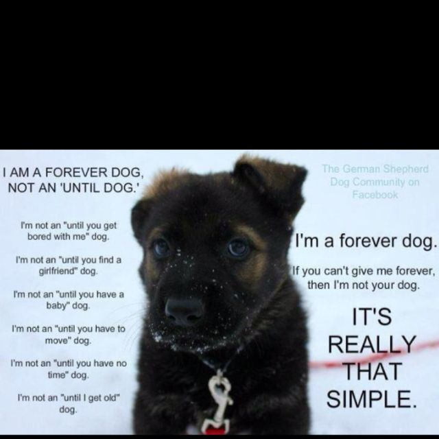 I am a FOREVER dog!!! This really hits home for me (raise GSD). May this not only apply to German Shepherds Dogs. But, to ALL animals!!!