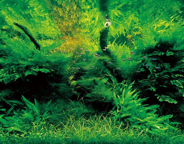 Nature Aquarium | AmanoTakashi.net