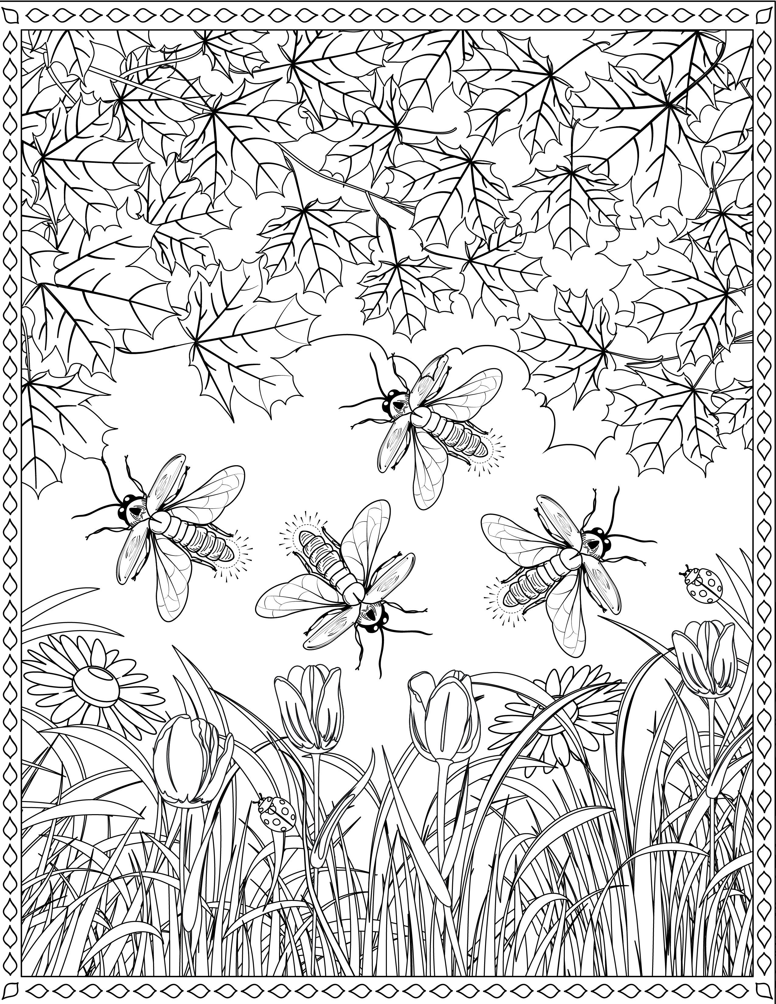 Firefly Coloring Page Coloring Pages Color New Crafts