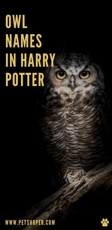 Owl Names 200 Incredible Ideas Incl Harry Potter Owl Petshoper In 2021 Owl Harry Potter Owl Harry Potter Owl Name