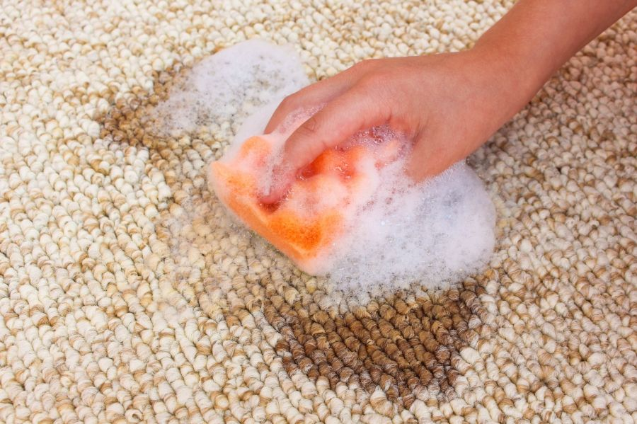 Teppich Mit Waschmittel Reinigen Perle Gesucht