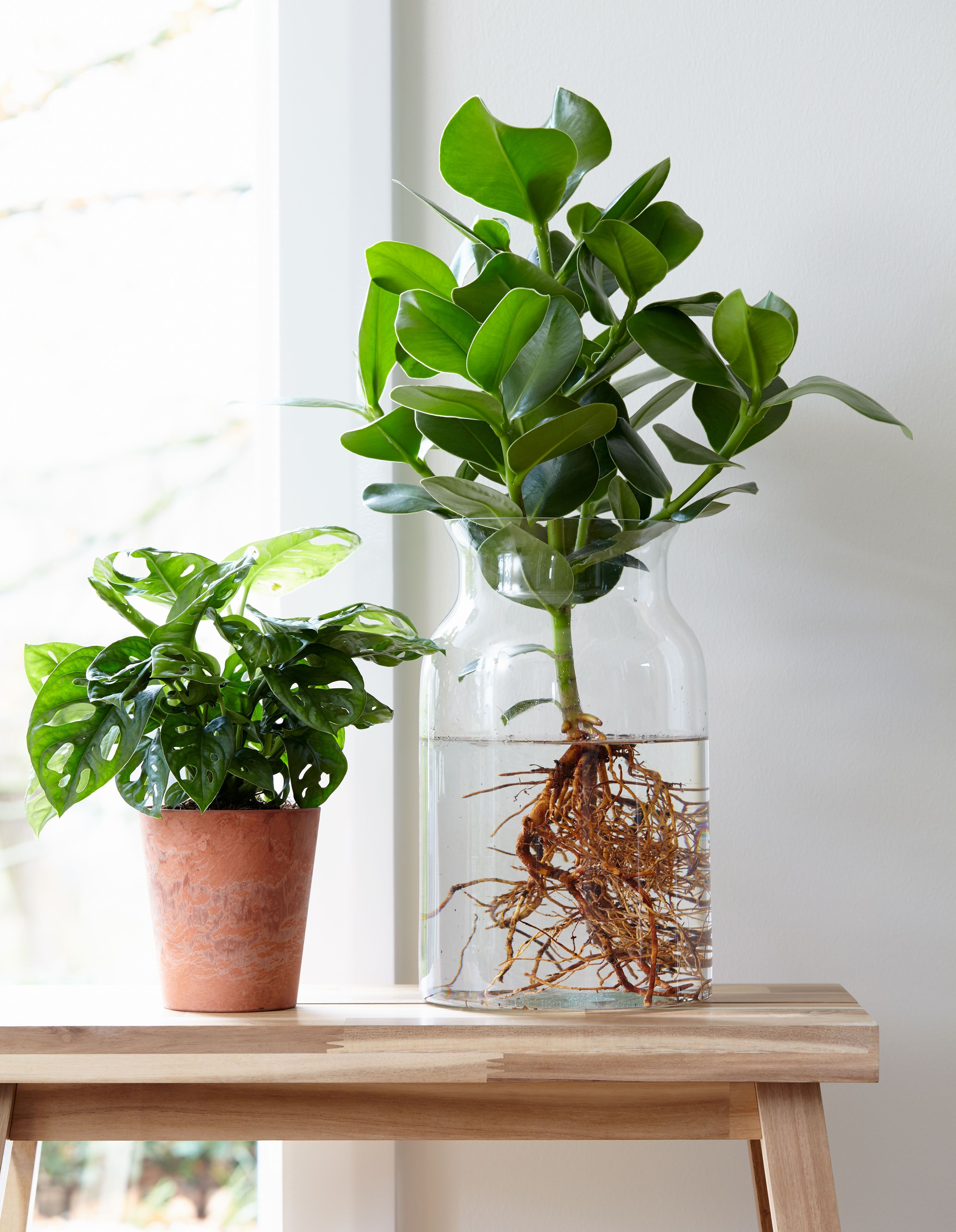 Anthurie im Wasser!: Für mehr Tipps zum Garten und Pflanzen schauen Sie auch auf